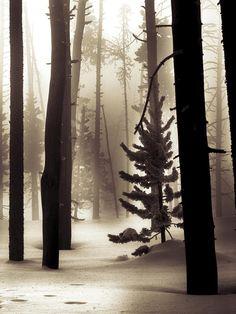 ✯ Winter Forest (Ben)