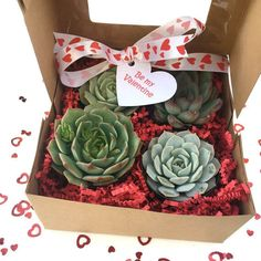 At The Online Garden Center, to celebrate Valentines we've got an exclusive offer for you. We are giving away a beautiful Valentines Succulent Gift-box (worth $70) - absolutely free!  Just enter your details below and Like our Facebook page to be in with a chance of winning. Share with your friends to have more chances of winning. And, if you refer the eventual winner you'll win a set of our cute succulent planters.
