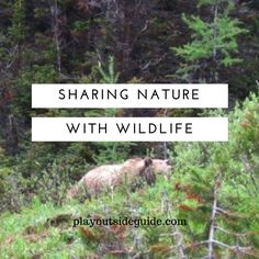 How can we safely share nature with wildlife? : Play Outside Guide