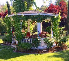Kriechenden Reben sind der schnellste Weg, Ihren Pavillon mit Ihrer Landschaft und Garten zu integrieren. Rebstöcke verleihen eine veralteter und natürliche Gefühl.