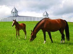 Dutch Warmblood Horses, Pineland Farms, New Gloucester, Maine. Photo by Stephen A. Smith