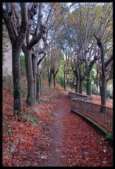 Frascati, Rome, Lazio_ Italy