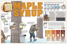 Make Your Own Maple Syrup - Have you ever wondered how the delicious maple syrup on your pancakes, waffles and French toast is made? The basic method comes from the indigenous peoples of North America, and it has not changed ever since. #maplesyrup #sugarmaple #experiment