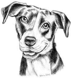 Pitbull-Terrier-Mixhündin June, Bleistiftzeichnung