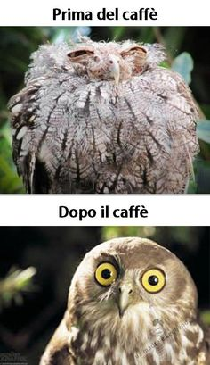 Before the coffee .... after the coffee