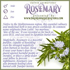 Besides its protective properties, Rosemary is also used in love, youth, and health workings; it can be worn or carried in a sachet or infused in bath water. In a pinch, it can be a substitute for frankincense. // #kitchenwitch #protection #healing #love #cleansing #negativity #nightmares #magick #herbs #incense