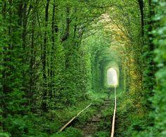Tunnel of Love, Klevan, Ukraine   Milky way scientists  1477456_555440954538601_1177484755_n.jpg (855×709)