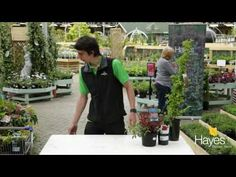 Where to plant evergreen shrubs in the shady part of the garden – Gardeners Advice