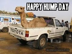 It's midweek again! Happy Hump Day!