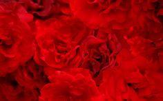 http://webneel.com/40-beautiful-flower-wallpapers-your-desktop