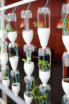 Awesome kid-friendly city garden project idea... Hydroponic Window Farm   Bottle Recycling