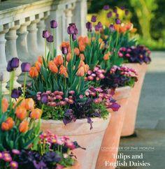 Tulips Garden, Garden Bulbs, Planting Flowers, Garden Pots, Container Plants, Container Gardening, Container Pool, Gardening Vegetables, Beautiful Gardens