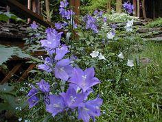 Inspiring shade plants