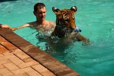 Swimming-With-Tigers.jpg (600×400)
