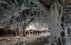 Toomer's Tradition