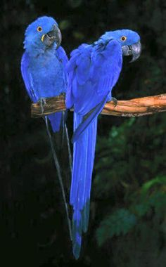 Avian Preservation And Information Of The Macaw Parrot Species With Amazing Pictures! Pretty Birds, Beautiful Birds, Animals Beautiful, Cute Animals, Wild Animals, Stunningly Beautiful, Absolutely Gorgeous, Tropical Birds, Exotic Birds