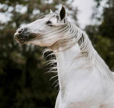 ♞Pinterest ➝ LimitlessSkyy♘ Horse Mane, Horse Head, Horse Girl, All The Pretty Horses, Beautiful Horses, Animals Beautiful, Wild Nature, Equine Photography, Horse Riding