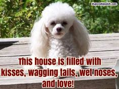 THIS HOUSE IS FILLED WITH KISSES WAGGING TAILS WET NOSES AND LOVE!!!