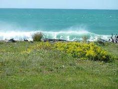 Image result for the beach house rarangi beach marlborough