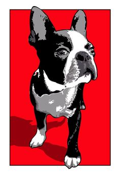 Boston Terrier, dog, art print, illustration in Pop Art colors of Red, Black and White, Poster size print available in multiple sizes.