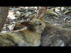 Rabbit Island (Okunoshima - Japan) - http://www.nopasc.org/rabbit-island-okunoshima-japan-2/