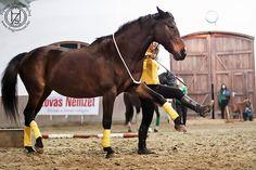 Fiatal Szabadidomítók Közössége   Zsuzsi Horses, Animals, Animales, Animaux, Horse, Animal, Animais, Dieren
