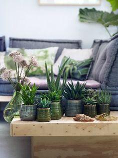 Die Aloe ist ein vielseitiger Wüstenbewohner und dabei pflegeleicht und gut für das Raumklima. Deshalb auch unsere Zimmerpflanze des Monats August – Pflanzenfreude.de
