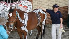 Higgins gives a lecture on the equine skeletal system. Each horse has 205 bones, making living models a helpful way to memorize them all.