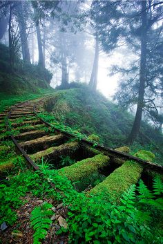 Taipingshan National Forest, Taiwan