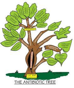 The antibiotic tree