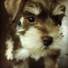 Our puppy!!!