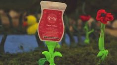 Scentsy Scent of the Month, March 2015 - Poppies & Clover www.lynnebiniker.scentsy.us
