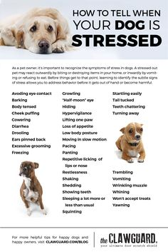 Learn to identify the symptoms of stress and anxiety in your dog
