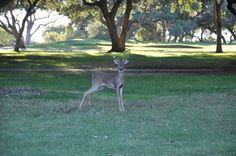 FORE! Any Baby Can Golf Tournament • blog.cbharper.com  https://www.facebook.com/media/set/?set=a.982211578507116.1073741858.132748450120104&type=3