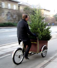 ~ Heading home with the Christmas tree ~