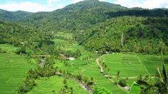 Bali Indonesia Holiday Travels: Busungbiu Rice Terrace Beautiful and Relaxing