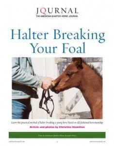 Halter-Breaking-Your-Foal