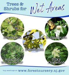 Tree Care, Shrubs, Garden Ideas, Shrub, Landscaping Ideas, Backyard Ideas