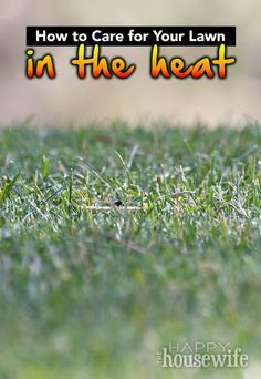 How to get rid of brown patches in lawn caused by dog urine 4 ideas how to get rid of brown patches in lawn caused by dog urine 4 ideas to save your grass from the burning brown spots its a dogs life publicscrutiny Image collections