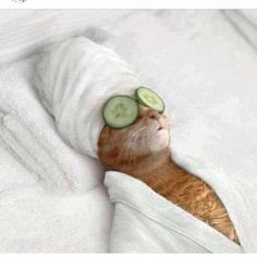A pussy cat getting pampered - we like your style!  @P.K. lober YOU FIND THE BEST THINGS ON HERE.. Greg and I are HOWLING. hahahahaha
