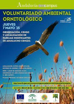 El próximo día 7 de mayo se va a realizar una jornada de #voluntariado Ambiental, de carácter #ornitológico, de observación y censo de población del Aguilucho Cenizo (Circus Pygargus)   Con Aula Verde - UJA  Inscripciones en: http://www10.ujaen.es/node/28276