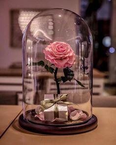 A clássica rosa de 'A Bela e a Fera' existe e dura para sempre