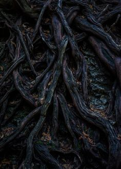 Untitled (roots) by PublicSecrecy shared by Ceri Fae Aesthetic, Viking Aesthetic, Character Aesthetic, Aesthetic Fashion, Art Texture, Yennefer Of Vengerberg, Over The Garden Wall, Holly Black, Dark Forest