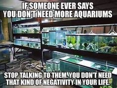 theshrimpfarm:  #realtalk #aquariumshrimp #aquascaping #shrimpofinstagram #fishofinstagram  My rule is no more than two tanks, unless you do it professionally, or you have nothing else to do (the boring stuff, like job, family, friends, etc :D). Two is enough – redoing them every 6-9 months will keep you busy forever :)