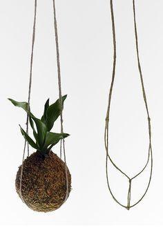 Unique Hanging Kokedama Ball Ideas for Hanging Garden Plants selber machen ball Moss Garden, Garden Art, Garden Design, Ikebana, Indoor Garden, Indoor Plants, Art Floral Japonais, Plantas Indoor, String Garden