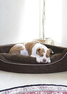 Give your pet their own comfortable place to rest with the Animals Matter® Corner Lounger Pet Bed that is smartly designed to tuck stylishly away in a corner.