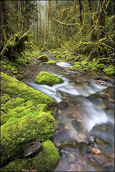 Williams Creek, Umpqua National Forest, Oregon