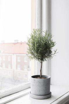 A minimal concrete planter for your windowsill.