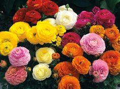 flores-de-cores.jpg (897×666)