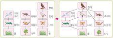 생물의 상호 작용 : 학습백과zum Diagram, Books, Libros, Book, Book Illustrations, Libri